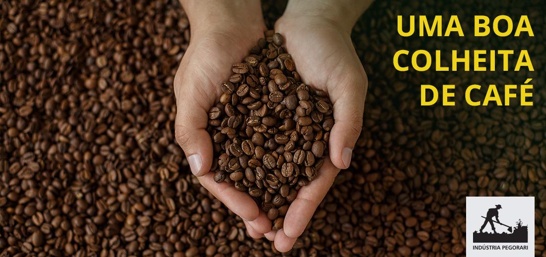 Derriça no chão conheça essa técnica e saiba o passo-a-passo para uma boa colheita de café.