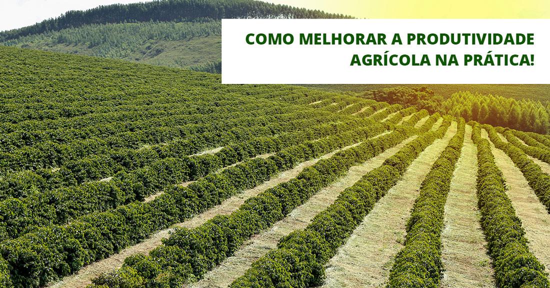Conheça algumas formas de melhorar a produtividade agrícola na prática