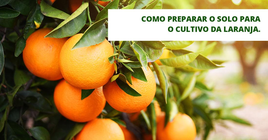 Preparo do solo: Cultivo da laranja
